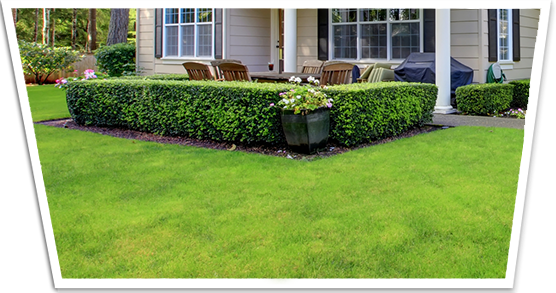 Lawncare and Fertilization